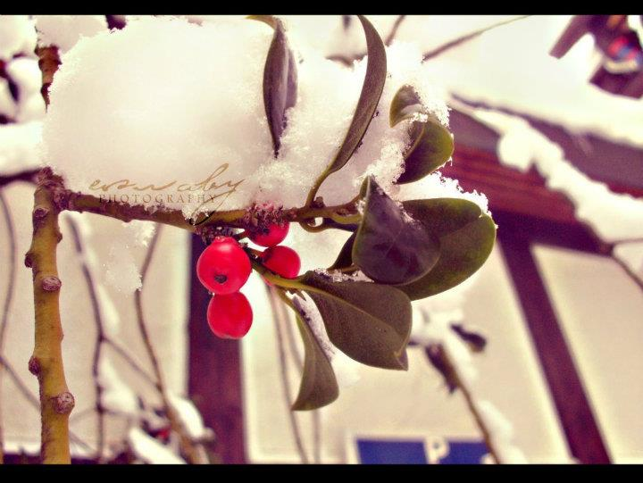 Esraby - Photography Winter